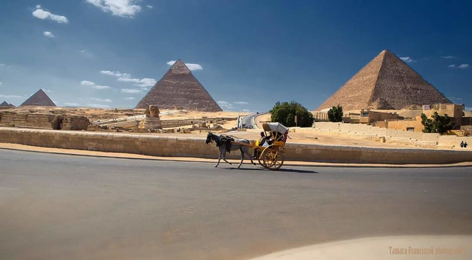 Egypt, Mother Of The World Egyptian Pyramids Of Giza Sphinx Giza Egypt Sphynx Sphinx Giza, Caïro, Egypt Pyramids At Giza Cairo Egypt Landscape Nature_collection EyeEm Best Shots - Nature Horse And Buggy Toerist Canon D6 Full Frame Professional Camera EyeEm Gallery Landscape_Collection Landscape_photography Nature_collection EyeEm Nature Lover EyeEm Best Shots EyeEm Masterclass Egypt, The Mother Of Civilization Egypt Egypt, The Mother Of The World
