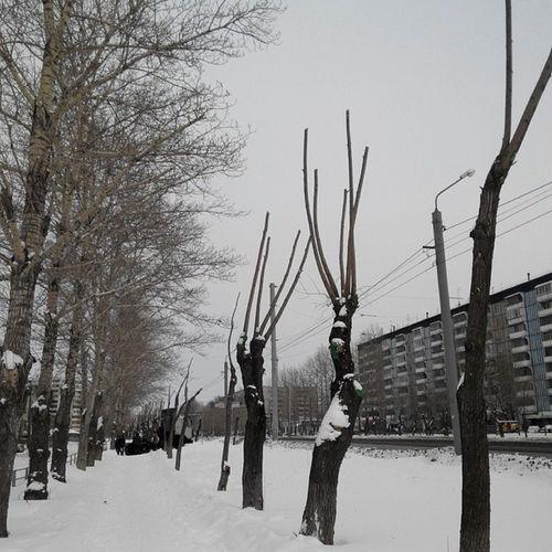 Хенде хох - сказали люди с пилами. сдаемся - сказали деревья и подняли ветки вверх.