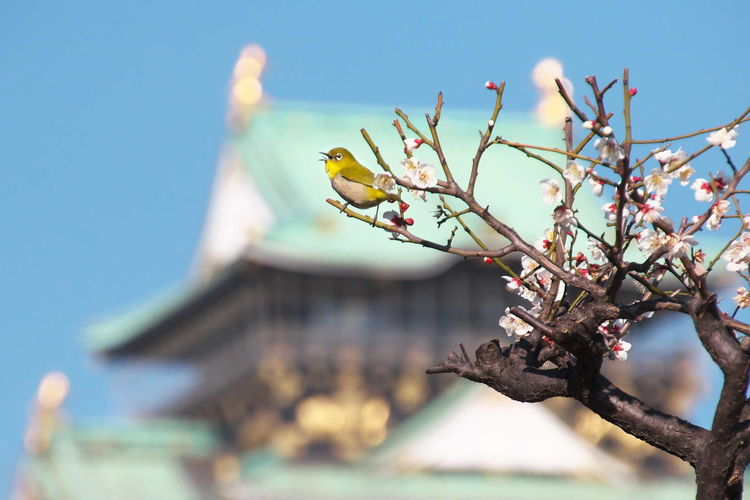 Low Angle View Of Bird On Blossom