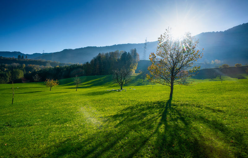 Plant Tree Sky Tranquil Scene Beauty In Nature Environment Landscape Scenics - Nature Tranquility Green Color Grass Nature Non-urban Scene Sunlight Day No People Land Mountain Idyllic Field Sun Outdoors