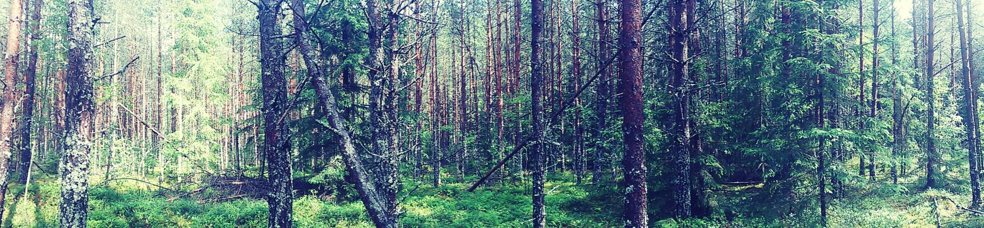 In The Forest Blueberries Beforethestorm Sun Naturetime Withloves ☺💧⚡