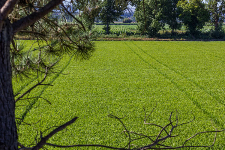 Agriculture Beauty In Nature Branch Day Field Freshness Grass Green Color Growth Landscape Nature No People Outdoors Rural Scene Scenics Tranquility Tree