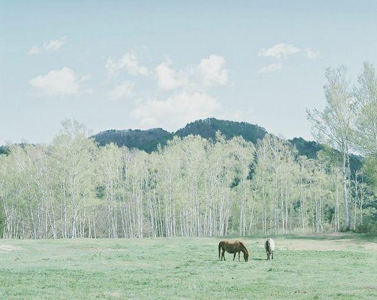 Mamiya RB67 Open Edit Horse 120mm Film Photography Japan Photo Green