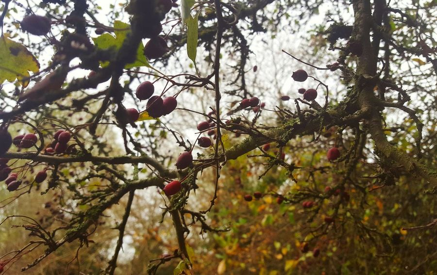 Autumn is upon us Contrast Autumn Tree Branch Fruit Sky Close-up Plant Twig Growing Fall Rose Hip Leaves Plant Life Change Fallen