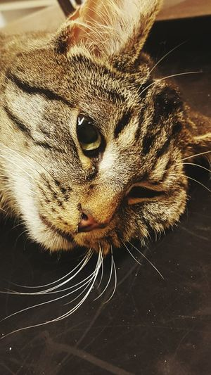 My cat. his name is pusur First Eyeem Photo
