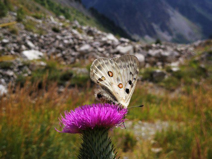 Georgia Hiking Mestia, Georgia 🇬🇪 Beauty In Nature Butterfly Chalaadi Glacier Close-up Flower Focus On Foreground Kaukasus Mountains Mestia Mountain Nature One Animal Outdoors