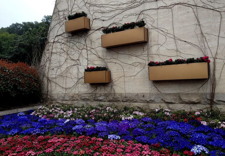 Pink flowering plants against building wall