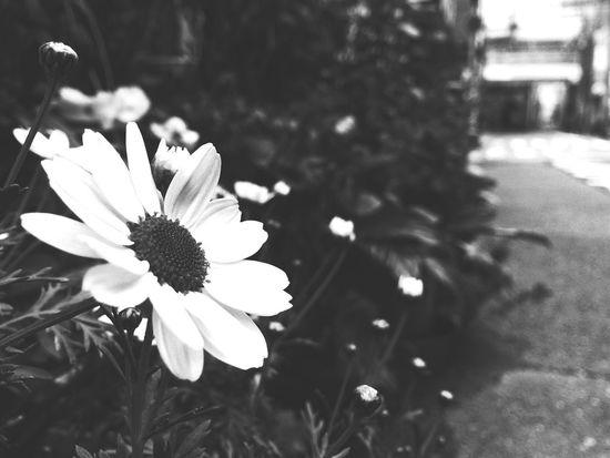 Blackandwhite Monochrome Street Portrait Street Flowers