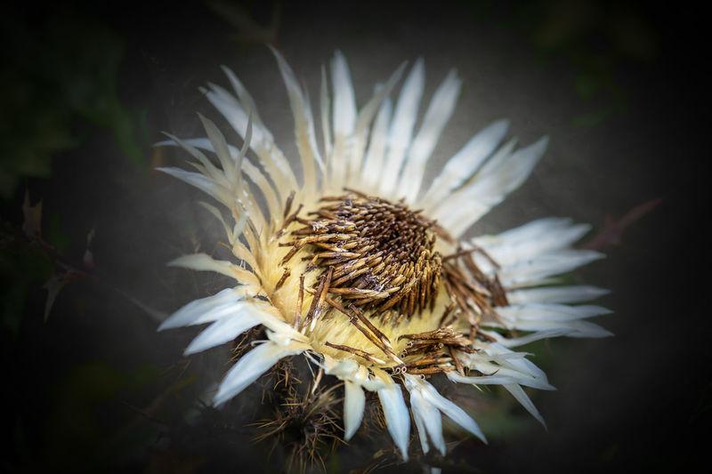 Plant Fragility