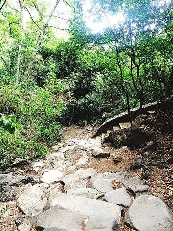 Tepoztlan un camino hermoso. ♥️😍⛰ Cool Day First Eyeem Photo Nature Nature Photography Naturelovers Trees Forest Tepoztlan