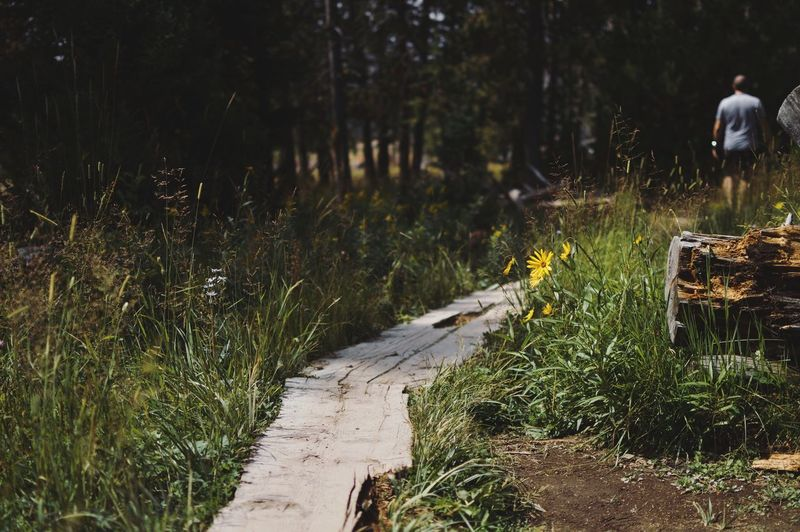 Walkway amidst grass in forest