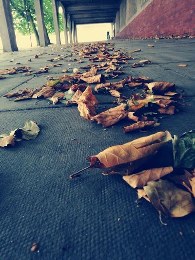 Autumn Change Surface Level Season  Leaf Autumn Change Surface Level Season  Leaves Large Group Of Objects Abundance Fallen Day Fallen Leaf No People Natural Condition Various Tranquility