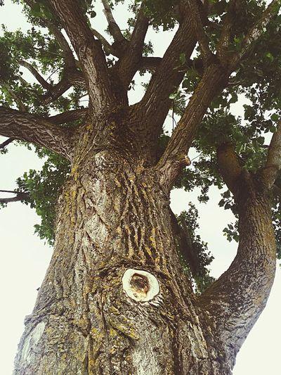 Shining Tree