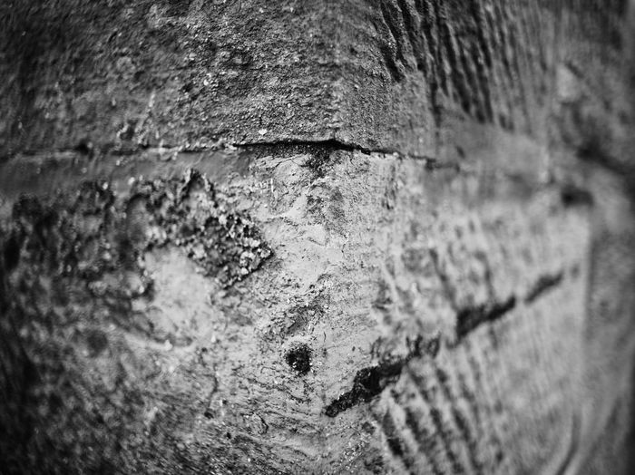 Detail shot of tree trunk against wall