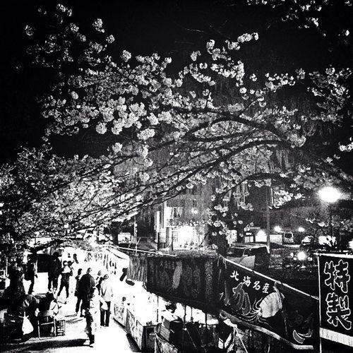 桜の色を出そうとしたけどモノクロが意外によかったので(^^)