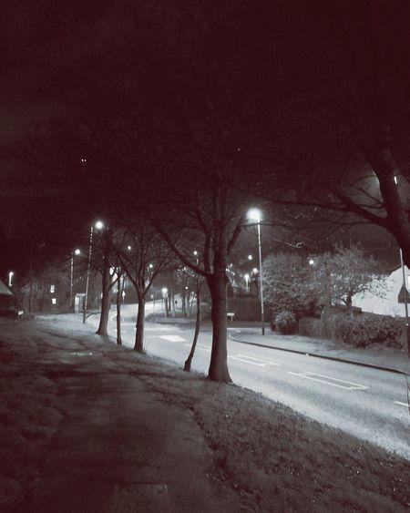 Night Tree Sky