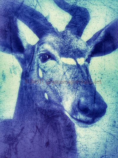Animal Themes One Animal No People Grymmreaper