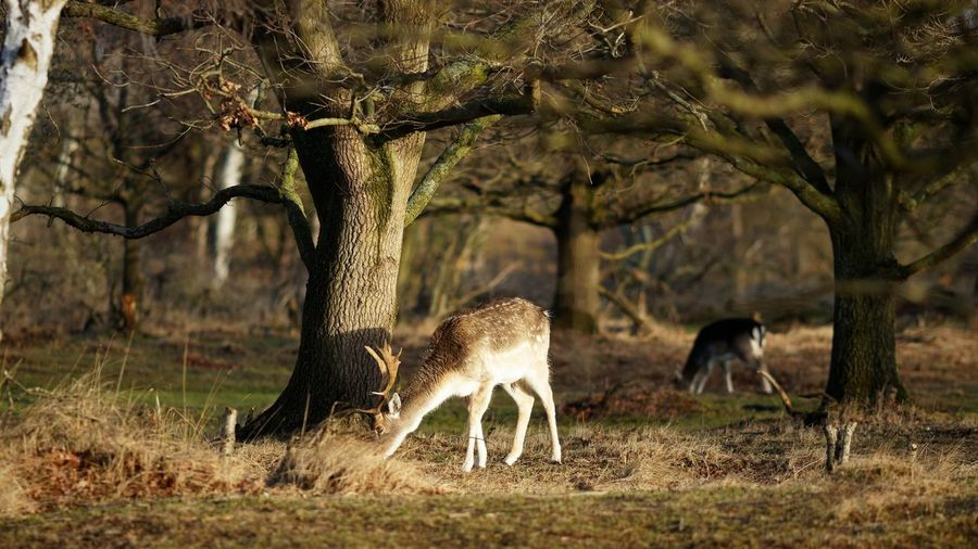 Forest Deer Stag Dunes Of Holland Animal Themes Animal Animal Wildlife Animals In The Wild Mammal Group Of Animals Vertebrate Outdoors