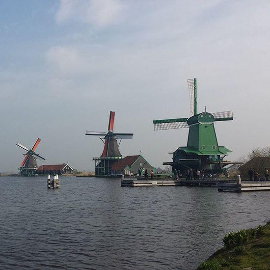 Trip Holandia Wildmills Zanseschans