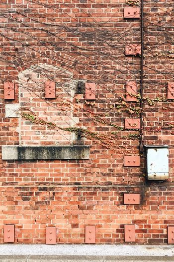 Creeper plants on red brick wall