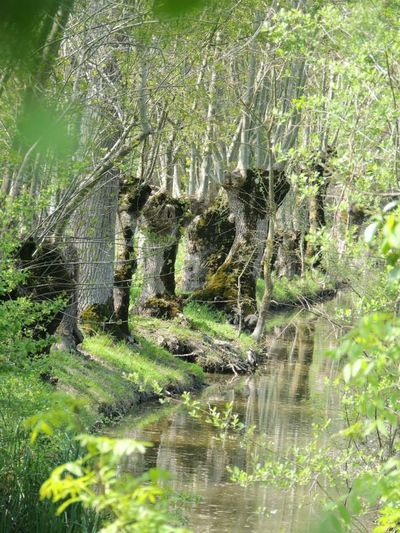 My Country In A Photo France Maraispoitevin Country Nature