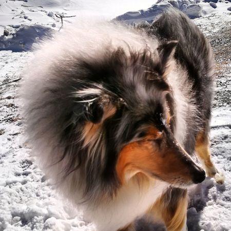 Animal Hair Pets Dog Mammal One Animal Close-up Portrait