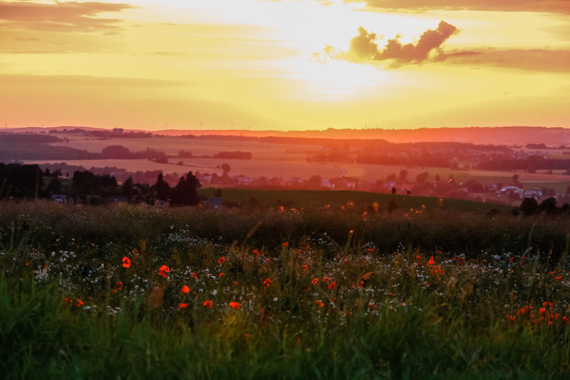 Dramatic Sky Dreamy In The Evening Sunlight Beauty In Nature Cloud - Sky Environment Field Flower Flowering Plant Growth Idyllic Land Landscape Nature No People Non-urban Scene Orange Color Outdoors Plant Poppy Field Poppy Flowers Scenics - Nature Sky Sunset Tranquil Scene Tranquility