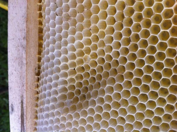 Bees Close-up Day Hexagon Nature No People Outdoors Vax