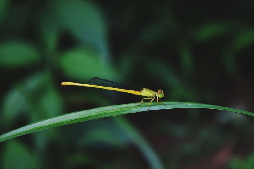 Damselfly Insect Close-up Animal Themes Plant Dragonfly Arthropod Arachnid Leaf Vein Magnification Blooming Animal Antenna
