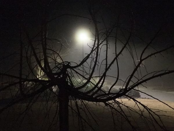 Eerie Bare Tree Tree Branch Night Moon Nature Beauty In Nature Outdoors Low Angle View No People Tranquility Silhouette Tree Trunk Moonlight Scenics