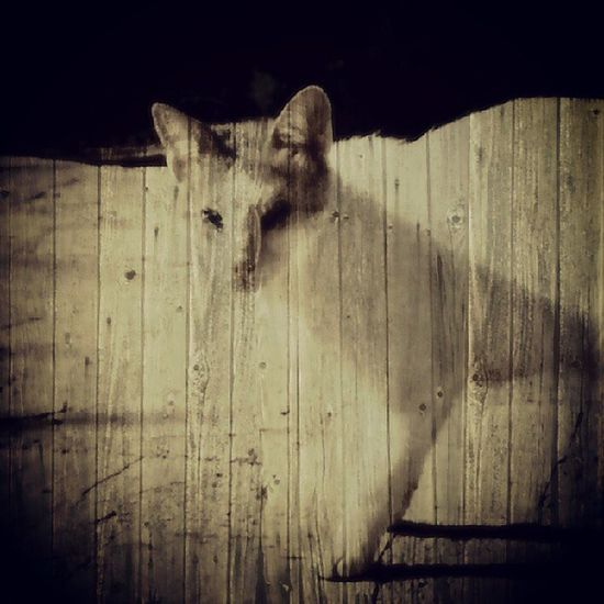 Catlover Cat Catpic Cats BlindCat Instagram Instaday Instacollage Ilustration Wall