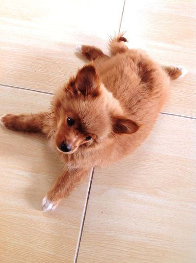 Augpao Pets Domestic Animals Mammal Hardwood Floor High Angle View First Eyeem Photo