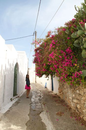 Architecture Bougainvillea Building Exterior Built Structure Full Length Greece Lachania Lifestyles Millennial Pink Narrow Street One Person Pink Color Rhodes Ródos Street Summer Summertime The Way Forward Travel Photography Vacation Walking Walking Around Women Young Women Lost In The Landscape Done That. Architecture Flowering Plant Outdoors