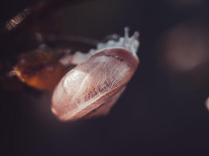 Little snail in