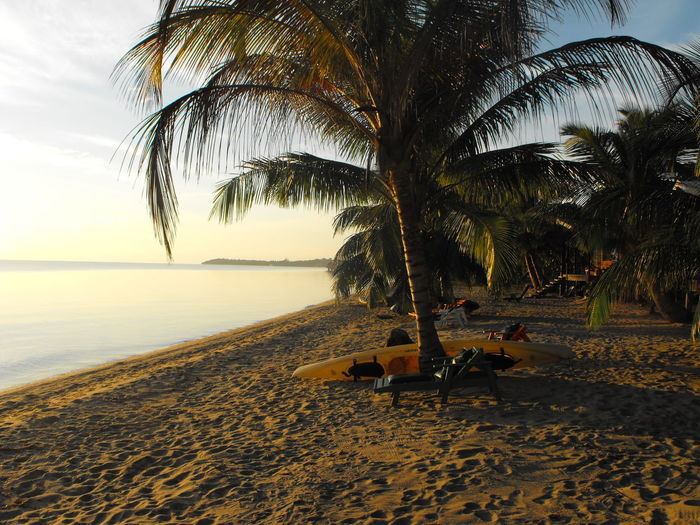 Sun rising over the Caribbean Beach Beach Life Beachlife Belize  Caribbean Caribbean Sea Island Island Life Islandlife Kayak Morning Palm Trees
