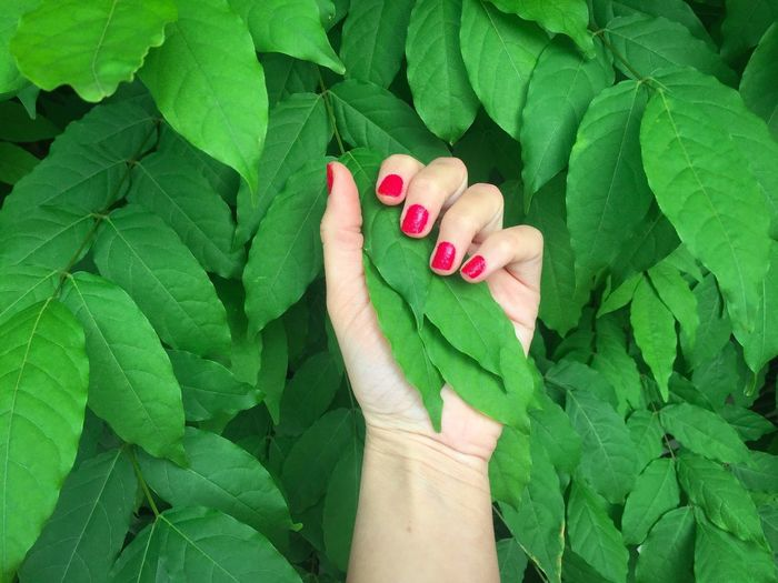 Woman's hand with bright red nails against wall of bright green leaves Leaf Green Color Human Body Part Human Hand Human Finger Red Nail Polish One Person Close-up Directly Above Day Outdoors People Adult Adults Only Woman Hand Nails Red Nails Palm Fingers Green Leaves