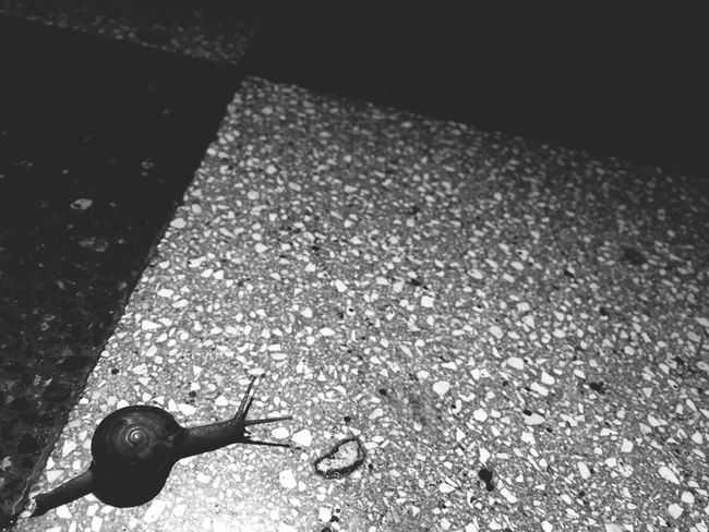 Road Street Close-up Outdoors Crawling Full Frame Animals Snails Long Road Home Monochrome Photography
