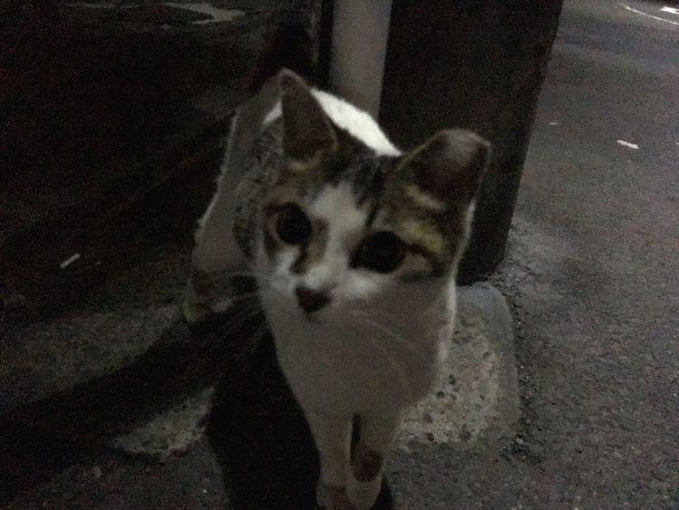Stray Cat 夜ねこ あっ大好きな、おかあさんが、家から出てきたっ って、お顔っすw