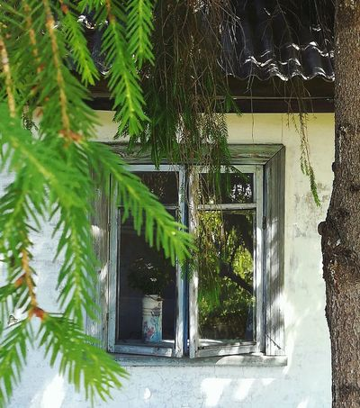 Country Life кантристайл Countryside прованс деревянный дом Provence Hygge Country Decor Decoration Garden Garden Photography Magic Moments Magic Garden окно Wood Tree Architecture Building Exterior Entryway Open Door Growing Leaf Vein Fungus Leaves