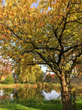 Alme Auen Park in Büren Tree Nature Growth Autumn Beauty In Nature Branch Scenics No People Outdoors Tranquility Change Low Angle View Leaf Day Water Close-up Sky Freshness
