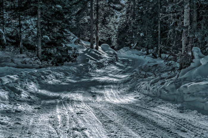 Winter Hello World Time Love Austria ❤ Sony Ggaßler Tirol  Photography Zeisslens Tyrol Point Of View Passion Snow Winter Cold Temperature Nature Tree Day Outdoors Beauty In Nature Forest