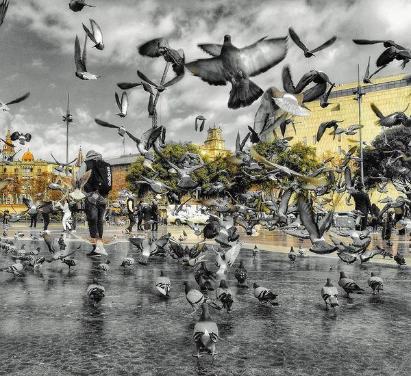 Bird Flying Day Animals Barcelona, Spain Plaza Catalunya Pigeon Rebajas Alone