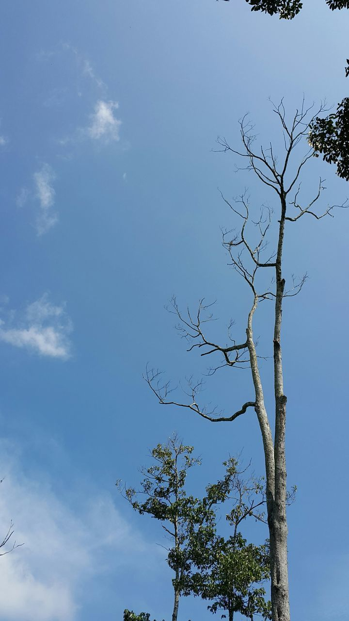 tree, low angle view, sky, nature, day, branch, beauty in nature, no people, outdoors, blue, growth, tranquility, bare tree, scenics