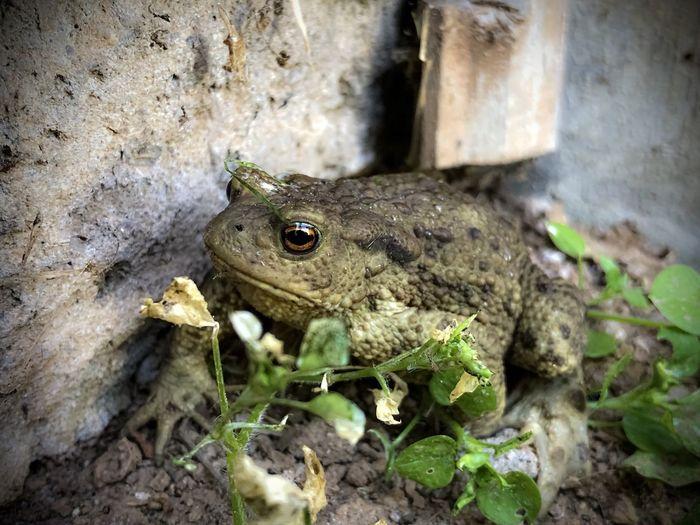 High angle view of frog on land