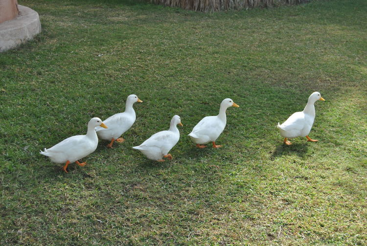 Birds on grassy field