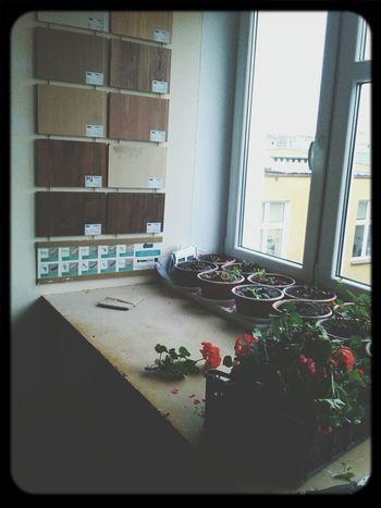 Architecture Construction Plants Lesson ???????????