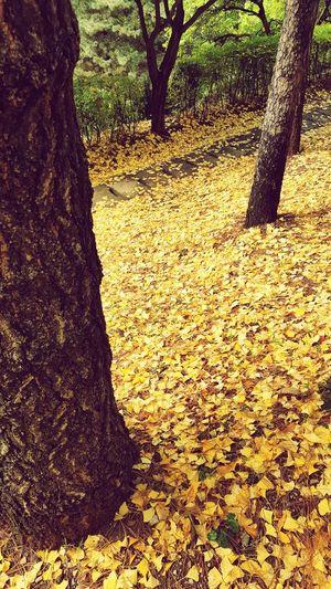 이 좋은 환경을 여유롭게 만끽할 수 있는 시간이 얼마 남지 않았다. 가을 은행잎 낙엽