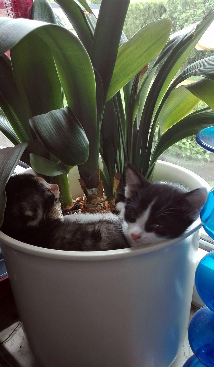 CLOSE-UP OF CAT IN POT