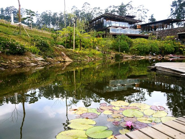 Cafe Relaxing Green House Architecture Nature Lake House  Lake View Exterior