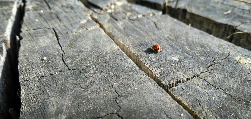 The long walk Red On The Edge Autumn EyeEm Nature Lover Macro Insects Macro_bugs Macro Macro Photography Macro_collection EyeEm Best Shots - Macro / Up Close EyeEm Portugal Trees Tree Trunk Red Red In The Edge Hello World Macro Beauty Focus On Macro Beauty